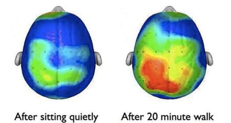 brainwaves before and after walking